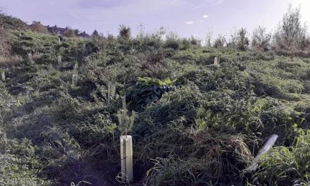 35,000 trees closer to a carbon neutral Kirklees