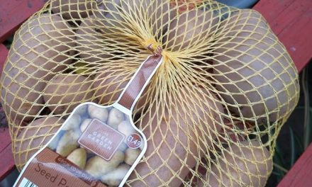 How to grow potatoes and why now is time to prepare