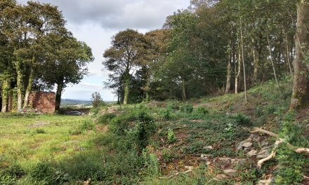 Companies fined for felling protected trees