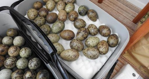 Warning issued after Huddersfield man is given suspended jail term for stealing birds' eggs